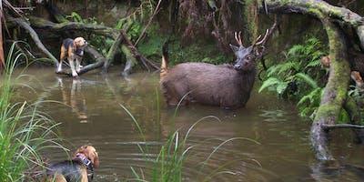 Hound Hunting Test - Mornington