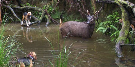 Hound Hunting Test - Alexandra