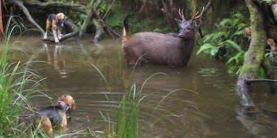 Hound Hunting Test - Warrnambool