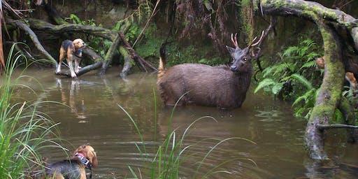 Hound Hunting Test - Traralgon