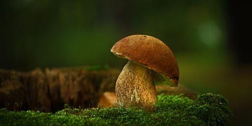 Présentation sur les champignons sauvages !