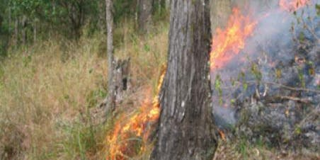 Native Vegetation and Fire Management workshop in Esk