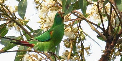 A Swift Talk on Parrots
