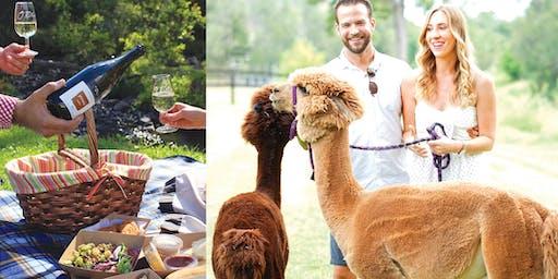 Alpaca Picnic @ Mountview Alpaca Farm