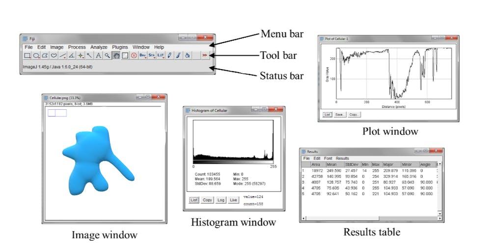 Using FIJI for image segmentation and the CVL Registration, Mon 09