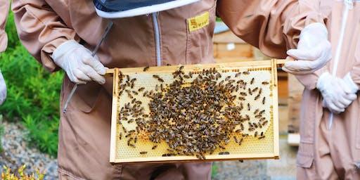 Bee Health Event / Digwyddiad Iechyd Gwenyn