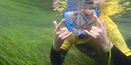 Summer Starts: Summer Snorkel tickets
