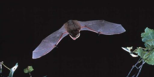 Hampstead Heath Bat Walk