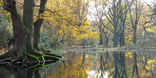 Hampstead Heath Staff Walk: Autumn Tree ID
