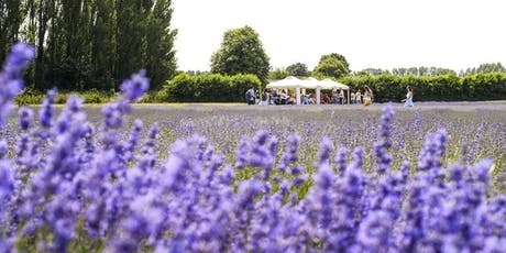 Castle Farm Lavender Tour tickets