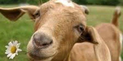 Goat Yoga 8/25 12pm