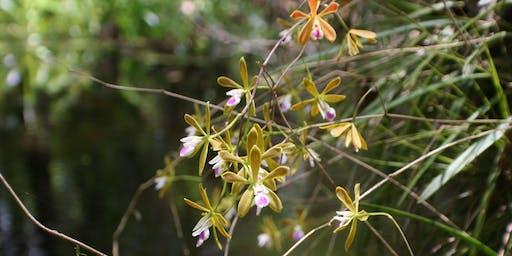 Orchids & Epiphytes of Brooker Creek Preserve
