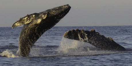 """Katherina Audley, """"When Whales Win, Everyone Wins"""" tickets"""