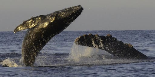 """Katherina Audley, """"When Whales Win, Everyone Wins"""""""