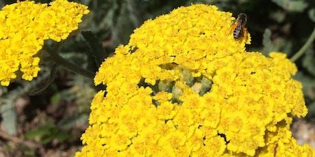 Sunday Science: Inside a Flower tickets