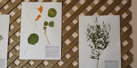 Mon herbier de plantes sauvages billets