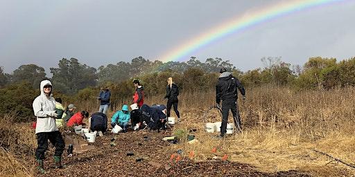 Volunteer at Arastradero Preserve: Habitat Restoration
