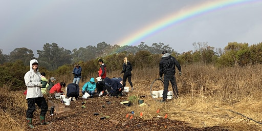 Volunteer Outdoors in Palo Alto: Planting at Arastradero Preserve