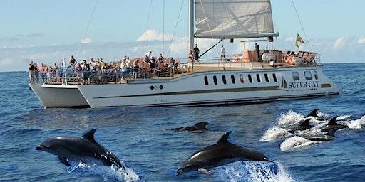 Dolphin Boat Trip Gran Canaria