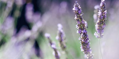 The Apothecarist: Distilling Essential Oils and Hydrosols