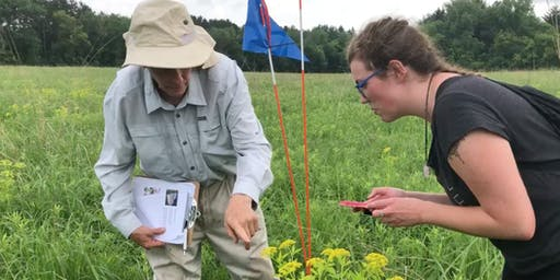 Citizen Science Pollinator Count at Pine Point - August 10