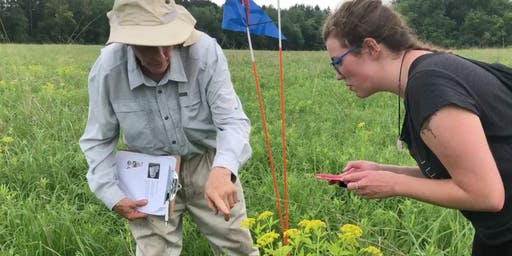 Citizen Science Pollinator Count at Pine Point - September 14