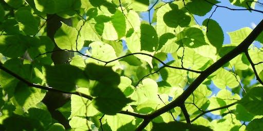 Autumn Tree Identification