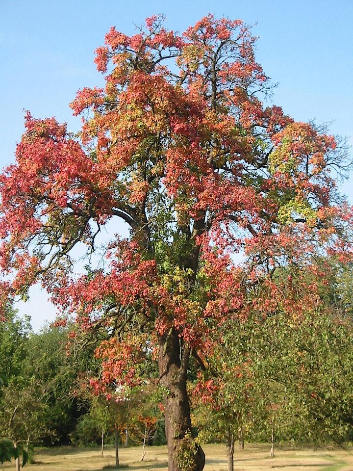 Veteran Trees of Hampstead Heath image