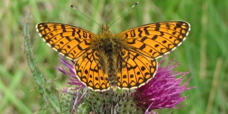 Rusland Horizons: Moth Morning and Introduction to Butterfly Identification tickets