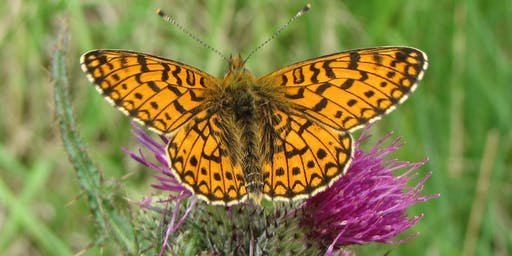 Rusland Horizons: Moth Morning and Introduction to Butterfly Identification