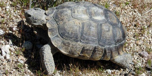 Gardening with California Desert Tortoises, a Walk and Talk with Katherine Pakradouni
