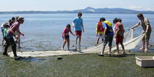 All Ages: Beach Seine - No Registration Necessary