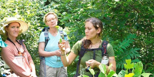Wild Herbal & Edible Plant ID & Foraging Walk w/ Abby Artemisia
