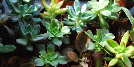 Succulent Building Workshop (Canton!) tickets