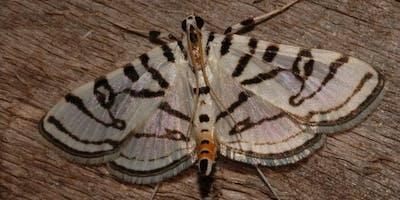 IJAMS Citizen Science: Moth Week at IJAMS