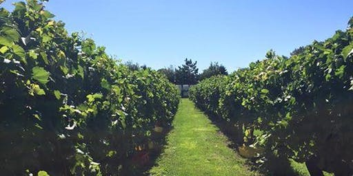 Grape Stomp & Harvest Experience