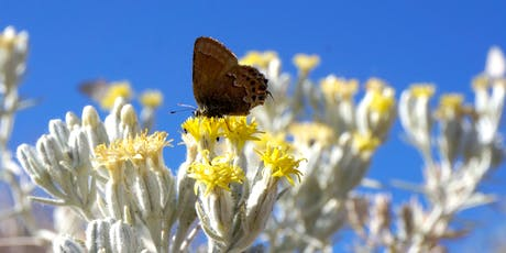 Desert Invertebrates: A Microscopy Primer Fall 2019 tickets