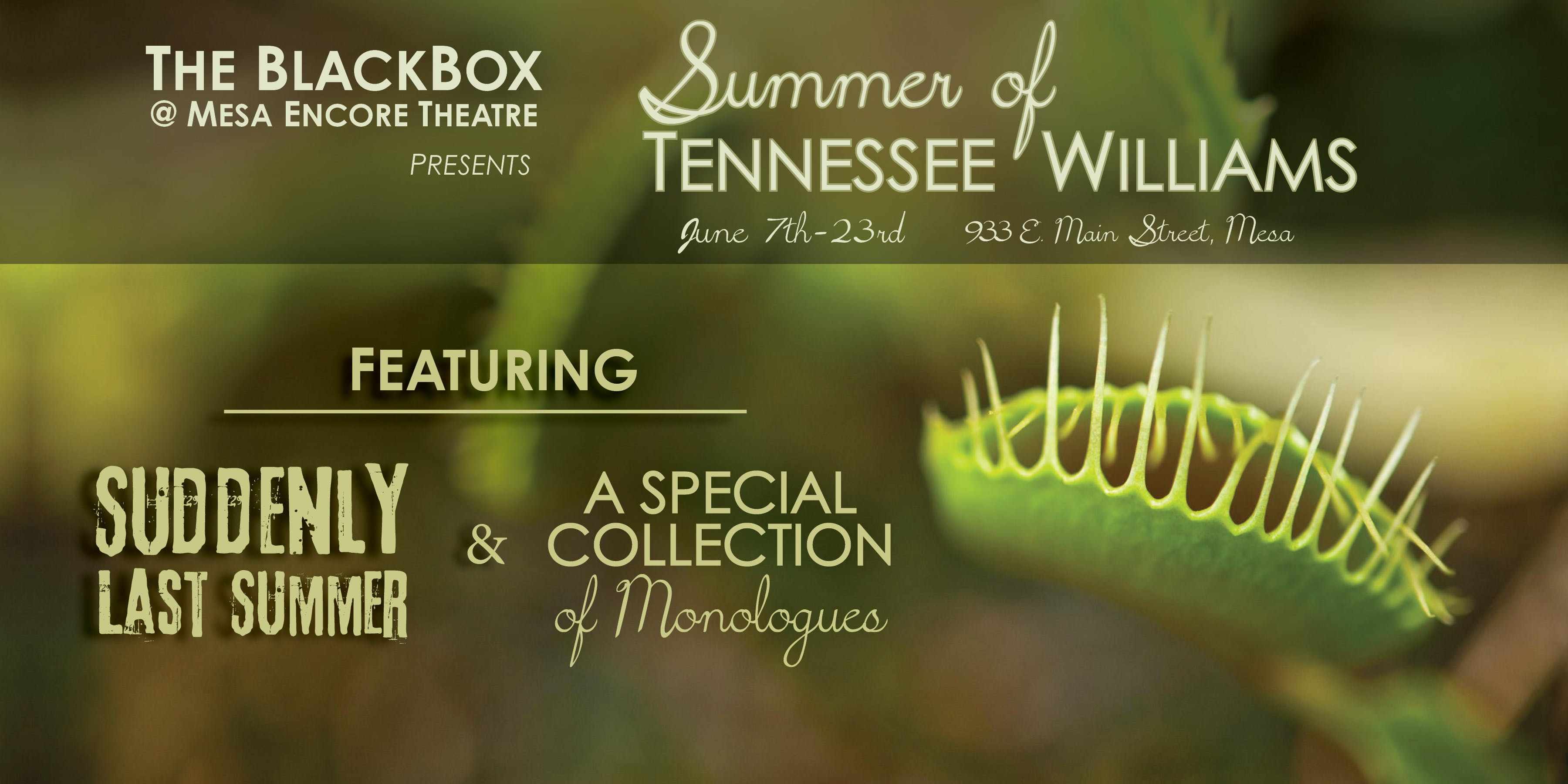 Summer of Tennessee Williams