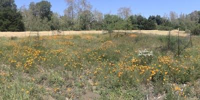 Greenfingers: Habitat Restoration at McClellan Ranch Preserve