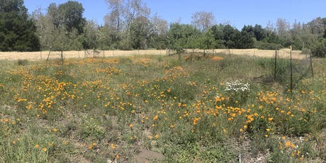 Greenfingers: Habitat Restoration at McClellan Ranch Preserve tickets
