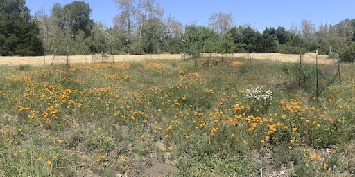 Greenfingers: Habitat Restoration at McClellan Ranch Preserve