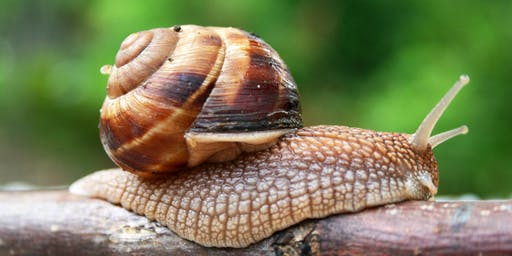 Australian Land Snails with Peter Hunt