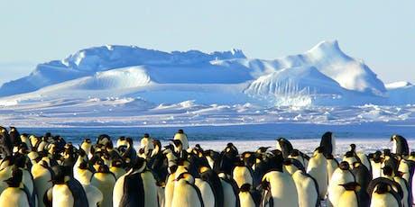 Penguin Parade tickets