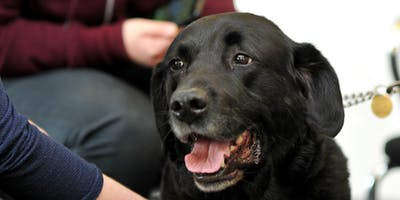 Meet Guide Dogs in the Library - Friday 24th May