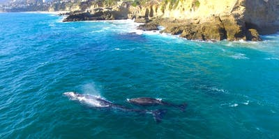 Whale and Dolphin Watching From Dana Point