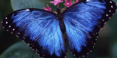 Houston Museum of Natural Science: Butterfly Center