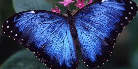 Houston Museum of Natural Science: Butterfly Center tickets
