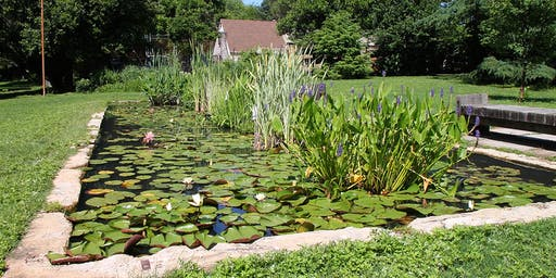 Kenilworth Aquatic Gardens Walking Tour