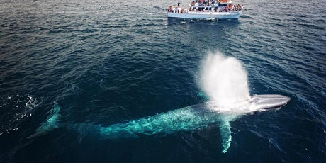 Whale Watching & Dolphin Cruises With Newport Landing tickets