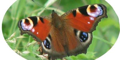 Butterflies, Bugs and Beasties (Churchill Playing Fields/Souter Parks))